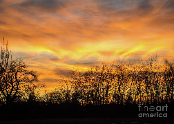 Photograph - Golden Sunset by Cheryl McClure