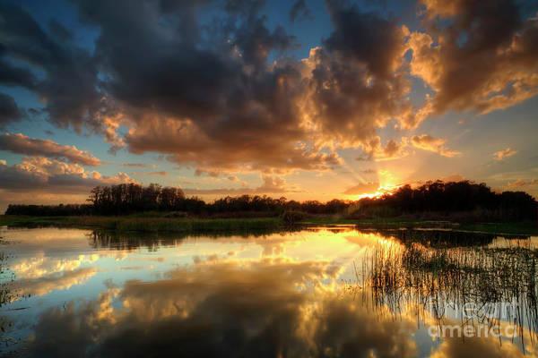 Wall Art - Photograph - Golden Sunset by Rick Mann