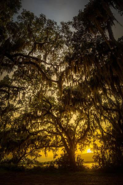 Photograph - Golden Sunset Through Spanish Moss by Chris Bordeleau