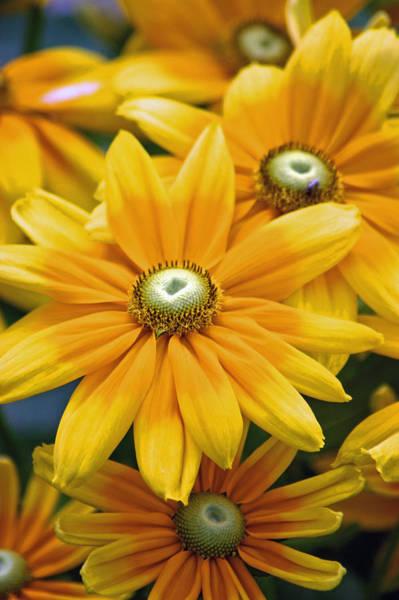 Photograph - Golden Sunshine by Donna Bentley