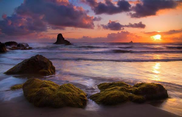 Kelp Photograph - Golden Tides by Mike  Dawson