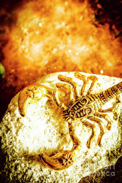 Scorpion Wall Art - Photograph - Golden Treasures by Jorgo Photography - Wall Art Gallery