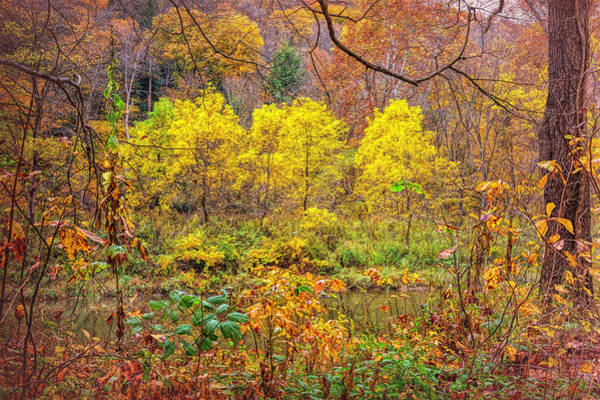 Photograph - Golden Trees Present by John M Bailey