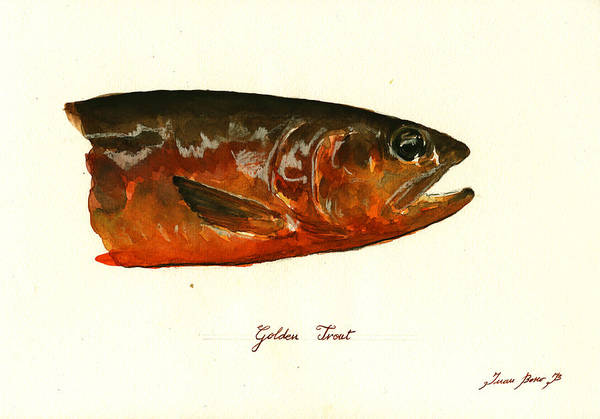 Fly Fishing Painting - Golden Trout  by Juan  Bosco