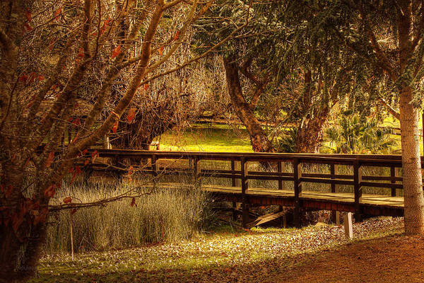 Photograph - Golden Valley Tree Park by Elaine Teague