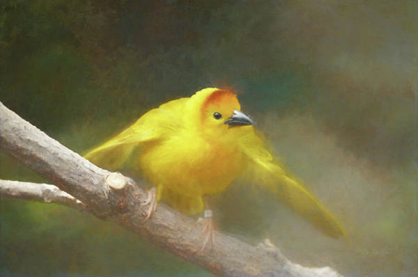 Wall Art - Photograph - Golden Weaver - Digital Painting by Maria Angelica Maira