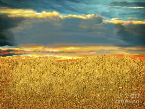 Parable Visions Wall Art - Digital Art - Golden Wheat Field by Constance Woods