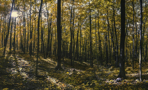 Canopy Photograph - Golden Woods by Scott Norris