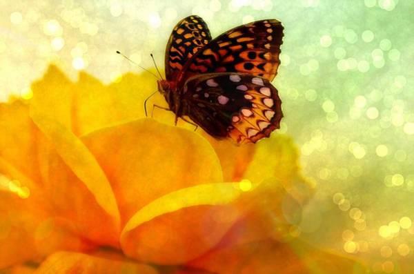 Butterfly On Flower Digital Art - Golden World Of Butterfly by Lilia D