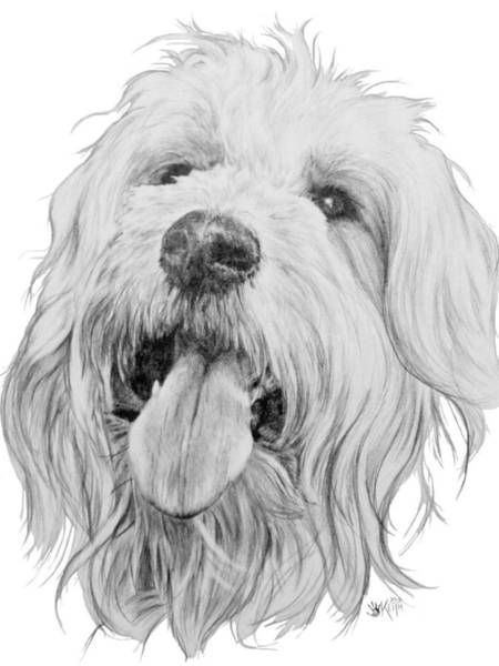Mutt Drawing - Goldendoodle by Barbara Keith