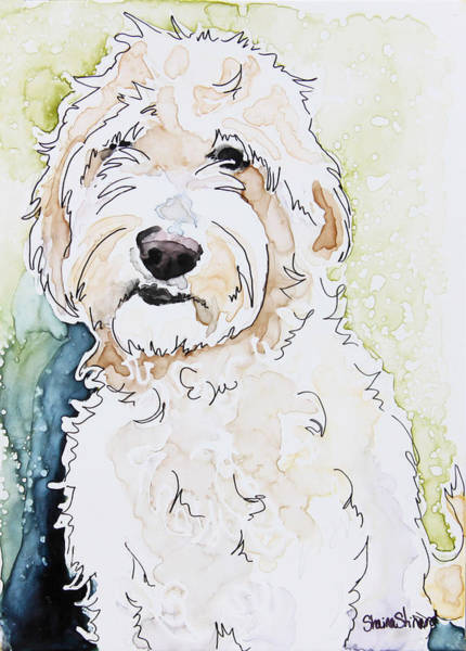 Poodle Wall Art - Painting - Goldendoodle by Shaina Stinard