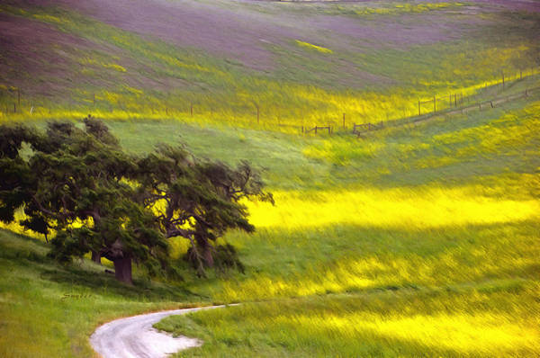 California Oak Digital Art - Goldenrod Oak Santa Ynez California 2 by Barbara Snyder