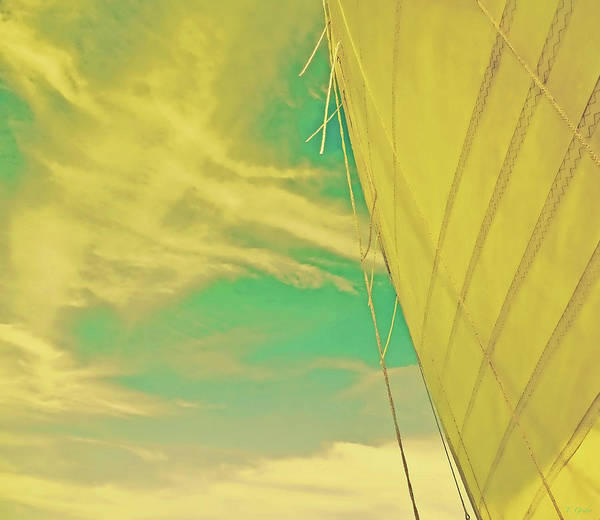 Wall Art - Photograph - Goldenrod Sail Special Edition by Tony Grider