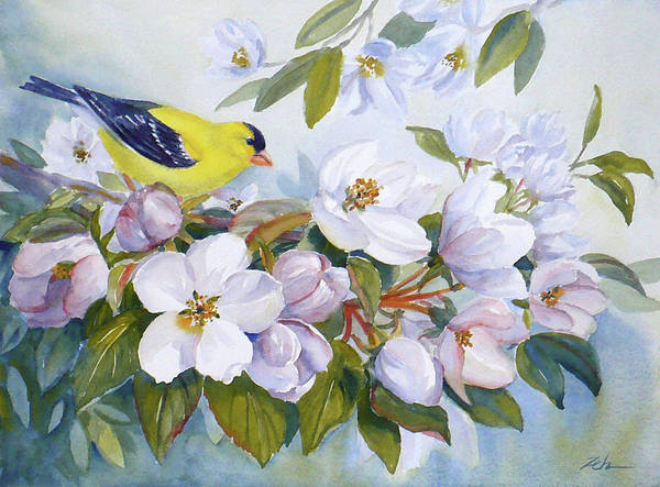 Goldfinch And Crabapple Blossoms Art Print