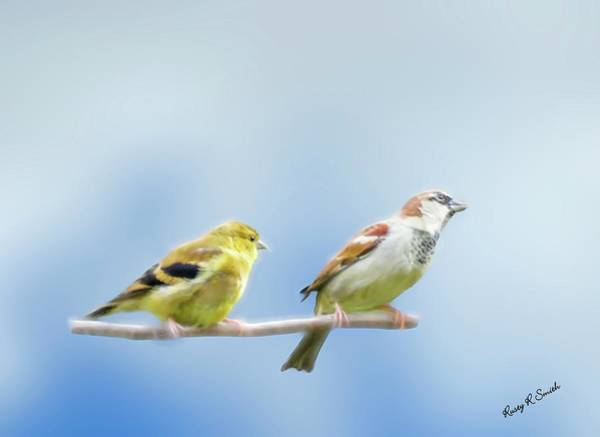 Digital Art - Goldfinch And House Sparrow Perching Together. by Rusty R Smith