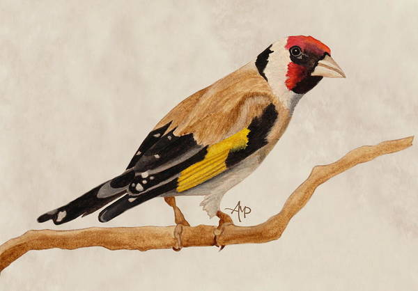 Painting - Goldfinch by Angeles M Pomata
