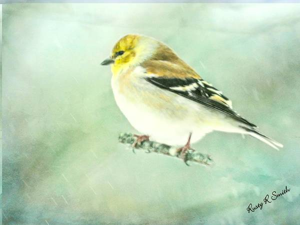 Digital Art - Goldfinch In Falling Snow. by Rusty R Smith