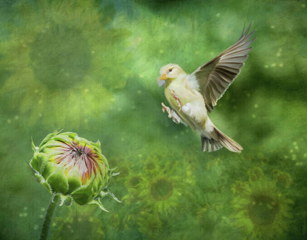 Photograph - Goldfinch Sunflowers by Patti Deters