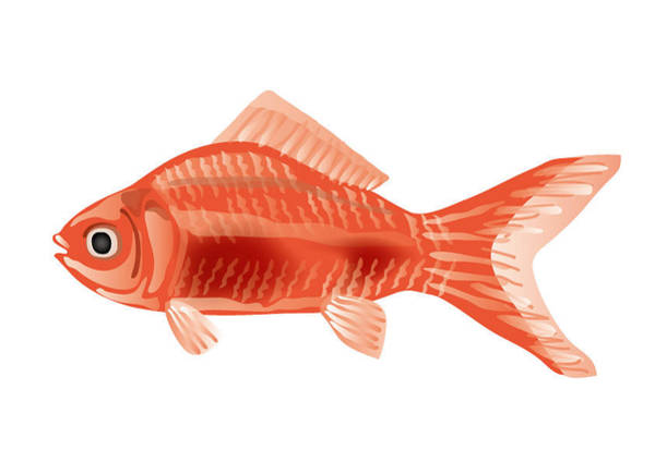 Digital Art - Goldfish by Moto-hal