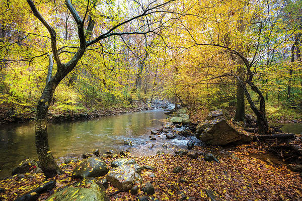 Cloudland Canyon Photograph - Golds Along The Stream by Debra and Dave Vanderlaan