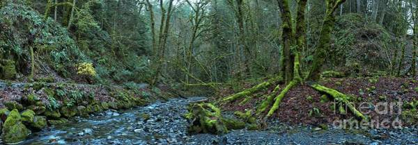 Photograph - Goldstream Park Panorama by Adam Jewell