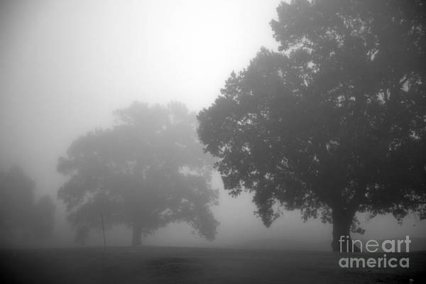 Wall Art - Photograph - Golf Course With Fog by Amanda Barcon