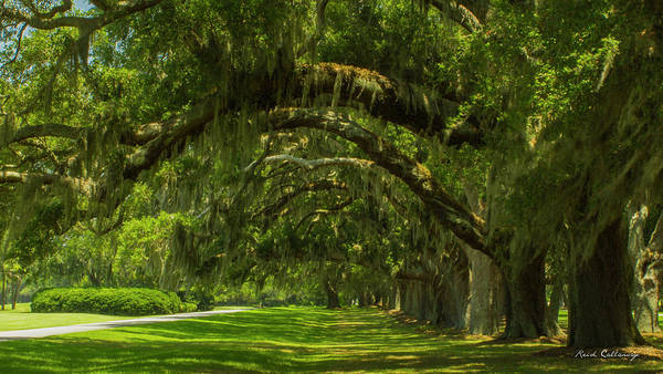 Photograph - Golf Drive Sea Island Golf Club St Simons Island Georgia by Reid Callaway