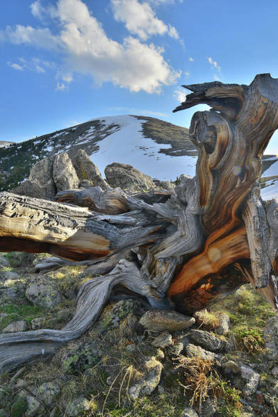 Photograph - Goliath Natural Area In Colorado by Ray Mathis