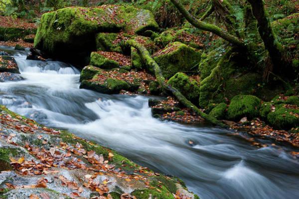 Photograph - Golitha Falls Iv by Helen Northcott