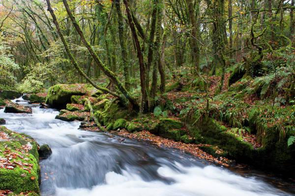 Photograph - Golitha Falls Vi by Helen Northcott