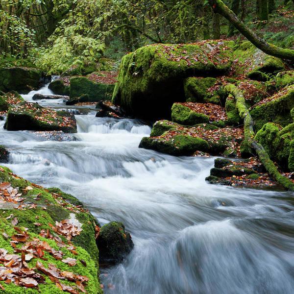 Photograph - Golitha Falls Vii by Helen Northcott