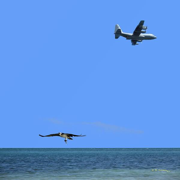 Photograph - Herky Bird And Osprey by R B Harper