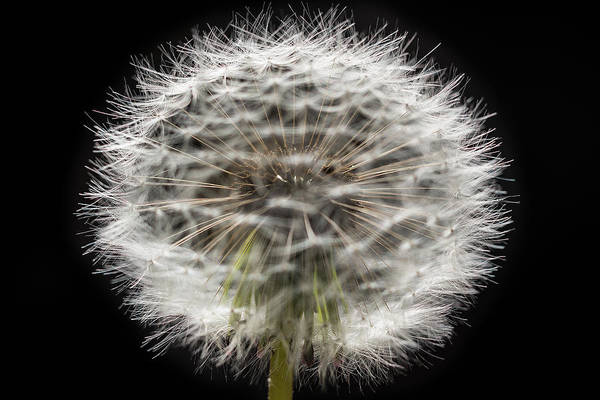 Wall Art - Photograph - Gone To Seed by Steve Gadomski