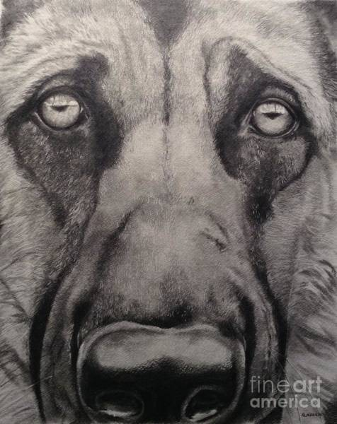 Drawing - Good Boy by Kathy Laughlin