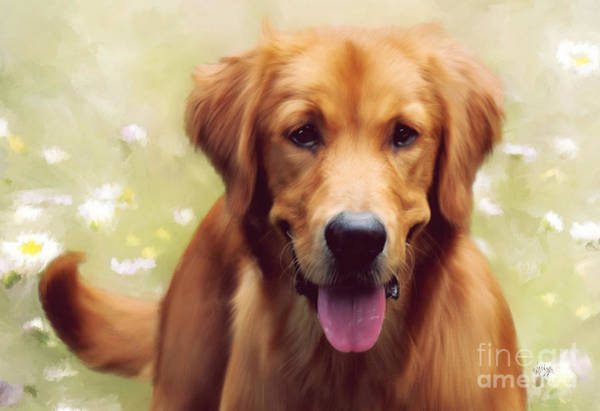 Golden Retriever Digital Art - Good Boy by Lois Bryan