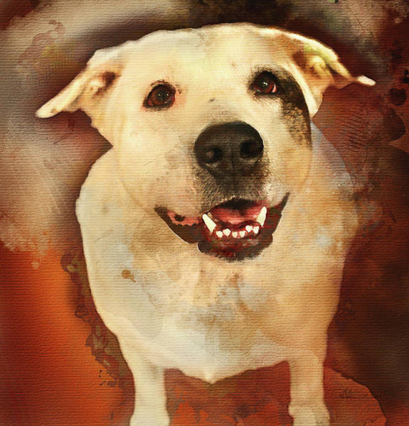 Photograph - Good Dog by Bellesouth Studio