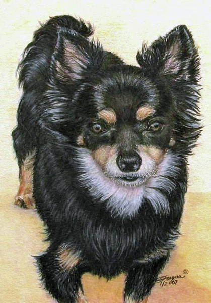 Wall Art - Drawing - Good Golly Miss Molly by Beverly Fuqua