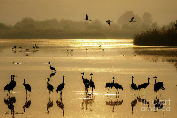 Photograph - Good Morning Chula Lake by Arik Baltinester