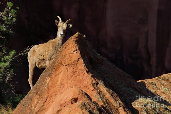 Photograph - Good Morning Ewe by Jim Garrison