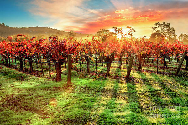 Cellar Wall Art - Photograph - Good Morning Napa by Jon Neidert
