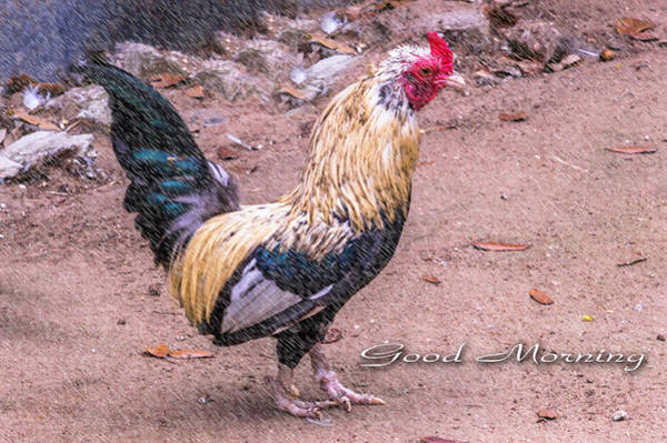 Chicken Feet Photograph - Good Morning Rooster by Leticia Latocki