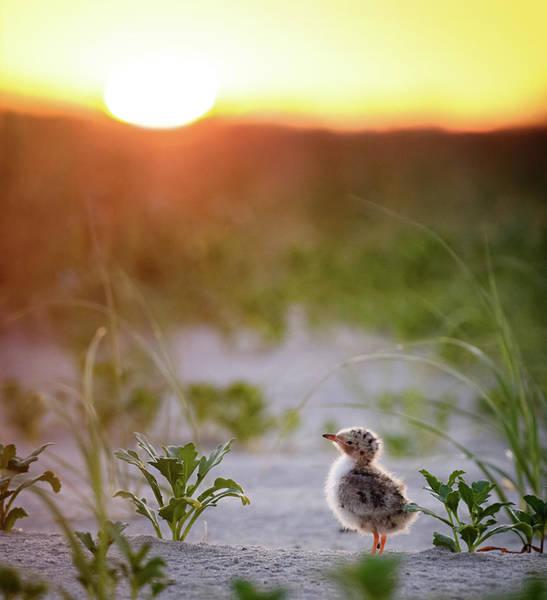 Sweet Bird Photograph - Good Morning Sunshine by Vicki Jauron