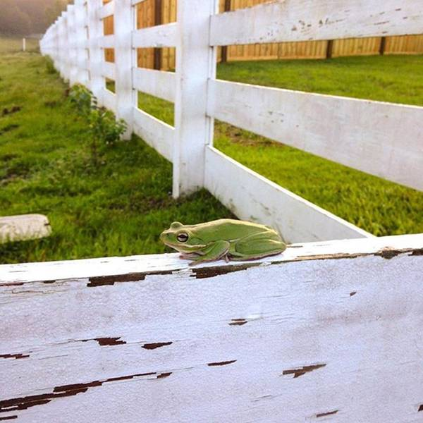 Wall Art - Photograph - Good Morning To You!! #frog #iphone5 by Scott Pellegrin