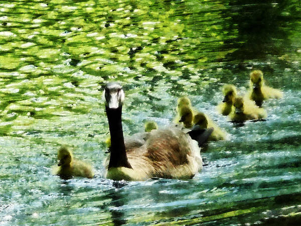 Photograph - Goose Family by Susan Savad