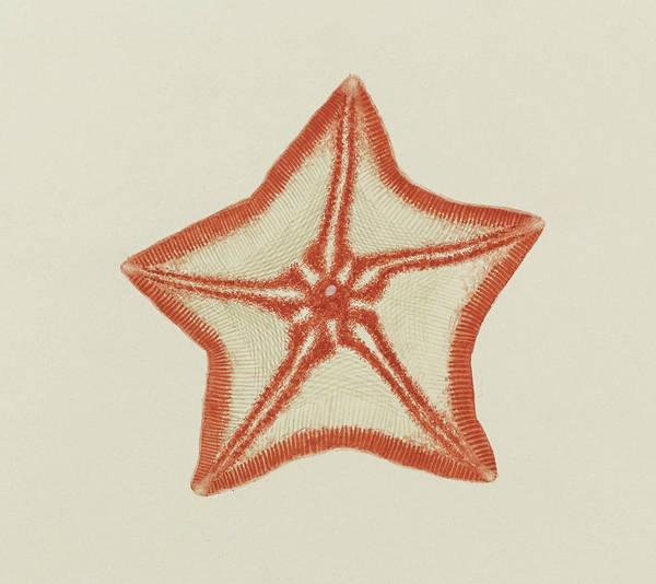 Starfish Painting - Goose Foot Starfish by Philip Henry Gosse