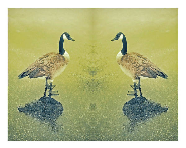 Wall Art - Photograph - Goose In The Mirror by Tony Grider