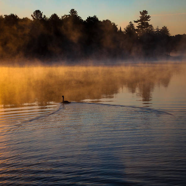 Photograph - Goose In The Mist On Old Forge Pond by David Patterson
