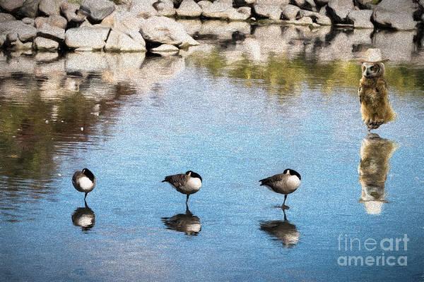 Photograph - Goose Patrol - V2 by Les Palenik