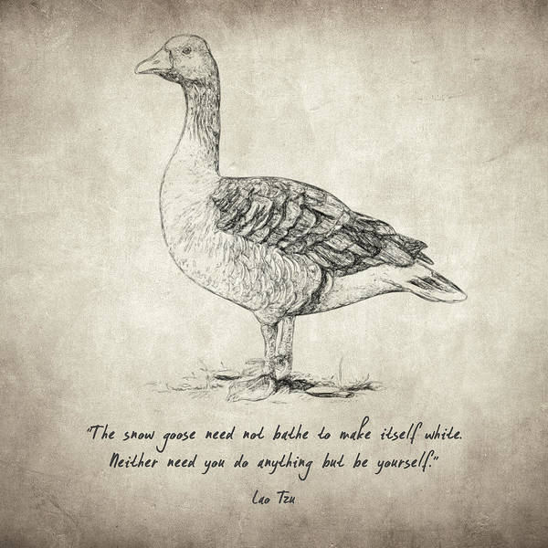 Drawing - Goose Quote By Lao Tzu by Zapista Zapista