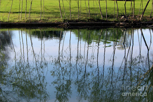 Photograph - Goose Reflections by Karen Adams